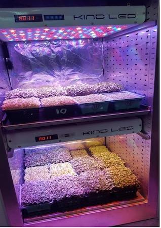 Micro ortaggi coltivati in serra