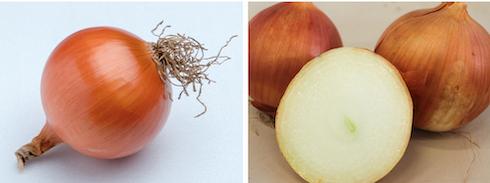 Varietà di cipolle