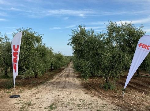 Le soluzioni di FMC contro la mosca dell'olivo