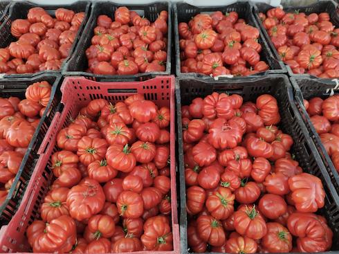 Pomodori trattati con Kappabrix