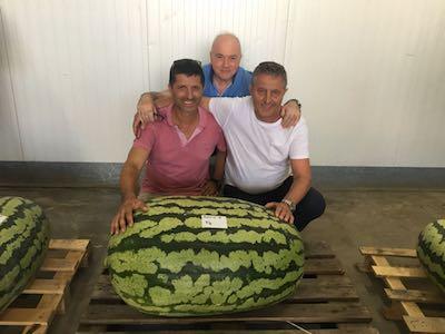 Il cocomero da record con al centro il giudice di gara, a sinistra il 1° classificato e a destra il presidente della Coop Agrieuropa