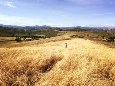 Uno dei tanti campi di grano del progetto Mulinum