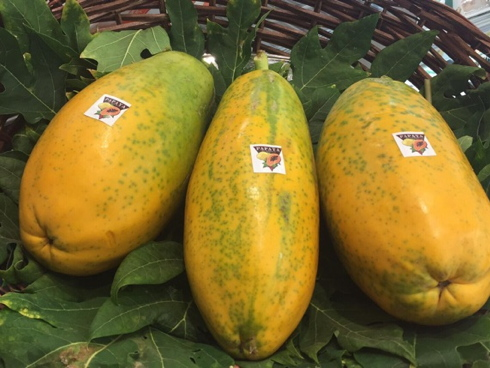 Frutti di papaya coltivato in Italia e made in italy
