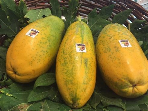 Frutto di Papaya coltivato e raccolto in Sicilia