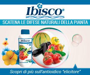 Ibisco - Gowan