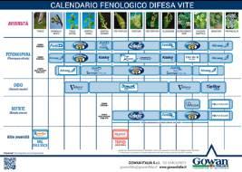 Calendario fenologico difesa vite