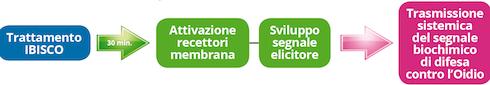 Trattamento ibisco