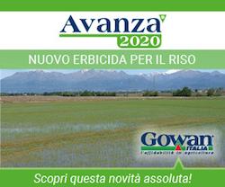 Erbicida Avanza