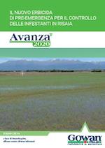 Brochure Avanza