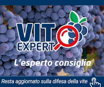 VitExpert