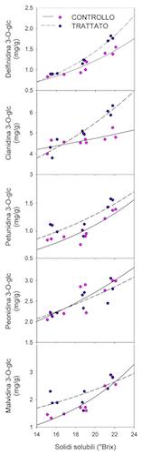 Rapporto tra la concentrazione zuccherina e la concentrazione di antocianine nelle bucce di uve di Sangiovese trattate con un estratto di Ascophyllum nodosum e in uve non trattate. 3-O-Glc= 3-O-Glucoside.