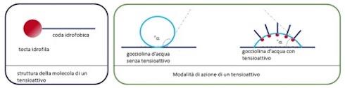 Le molecole dei tensioattivi