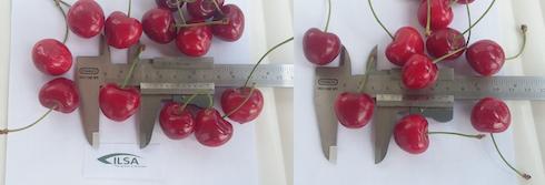 Frutta a confronto