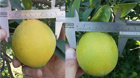 comparazione arancio
