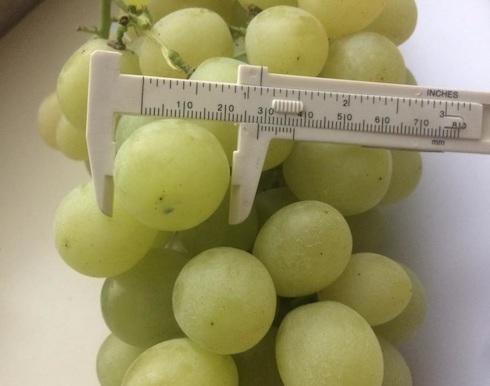 Calibro acini d'uva