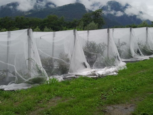 Reti monofila multifunzionali in un azienda del trentino coltivata a piccoli frutti