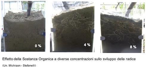Effetto della sostanza organica a diverse concentrazioni sullo sviluppo della radice
