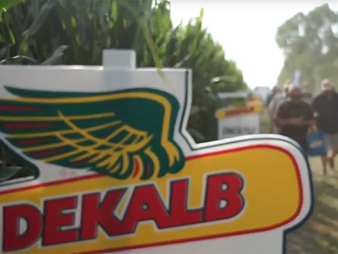 Dekalb-Monsanto, ibridi di mais per produrre e fare reddito