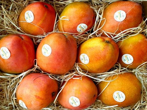 Mango dell'Etna, un mango d'eccellenza made in Sicily