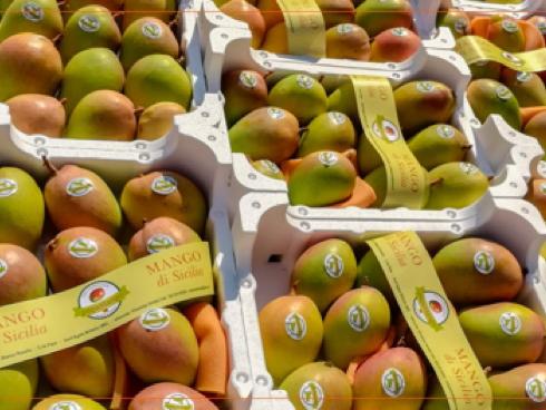 Mango, Papamango è un'azienda siciliana che produce mango made in Sicily
