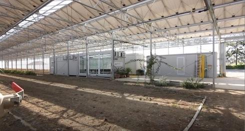 Un bugsfarm all'interno di una serra fotovoltaica