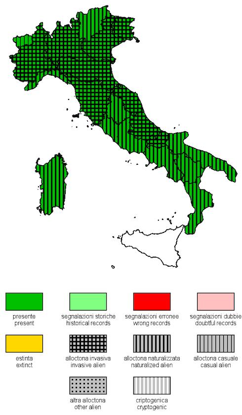 Distribuzione geografica dell'Amorpha fruticosa in Italia