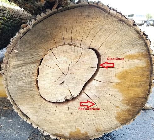 Esempi di cipollatura e fessurazione di un tronco