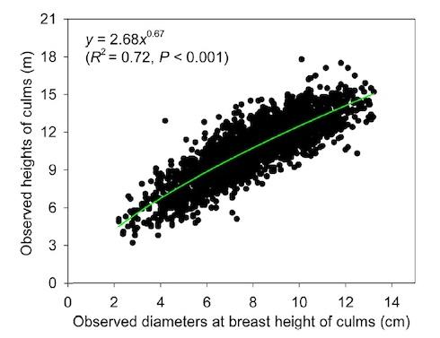 Dispersione delle coppie di valori dei diametri all'altezza del petto e le altezze di esemplari di 'moso', riscontrata in Cina