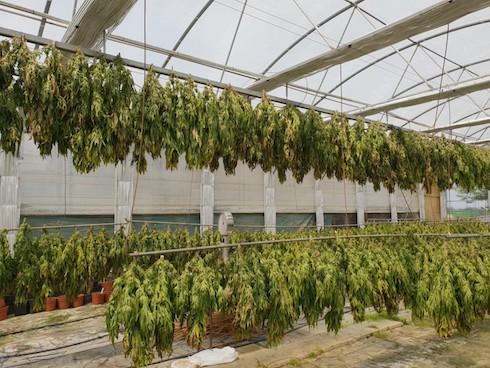 La cannabis light opportunit di reddito per l for Prezzo del ferro al kg oggi