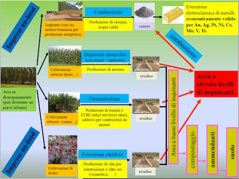 Possibili filiere di produzione agroenergetica per la decontaminzaione dei suoli
