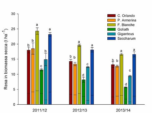 Grafico Rese in biomassa di Arundo donax (cloni Capo d''Orlando, Piazza Armerina e Fontane Bianche), miscanto (M. x giganteus e M. sinensis - Goliath), e S. spontaneum spp. aegyptiacum