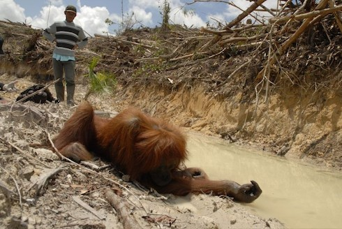 Why are rainforests being destroyed