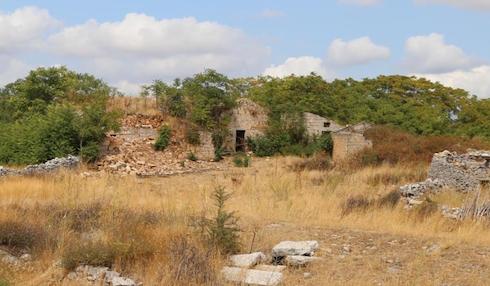 L'ailanto ha colonizzato un rudere nel Parco dell'Alta Murgia