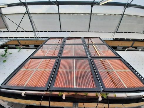 I pannelli installati all'interno dellaserra installata nell'Orto Botanico dell'Università Tor Vergata