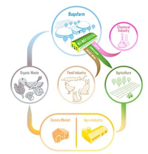Schema del ciclo di economia circolare proposto dal progetto Bef