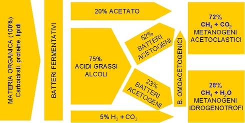 Lo schema del processo di digestione anaerobica