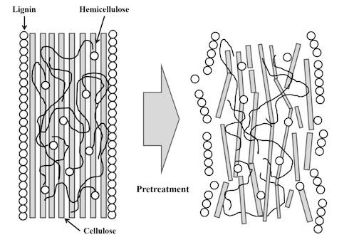 La struttura delle biomasse vegetali e l'effetto di un pretrattamento generico