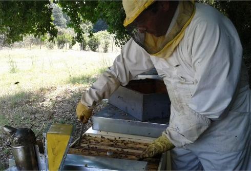 Giovanni Formato in apiario