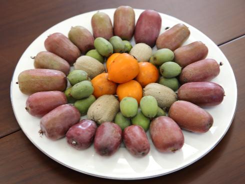 Frutti di nuove varietà di kiwi