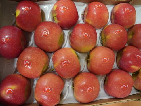 Regalyou* Candine®: dolce, croccante, elevata conservabilità, succosa e con piante resistenti alla ticchiolatura