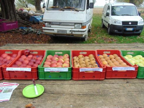 Nuove selezioni di melo, targate Unibo, a evento Cadriano (BO)