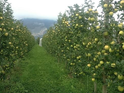 Il meleto sostinibile rappresenta una necessità per la melicoltura moderna