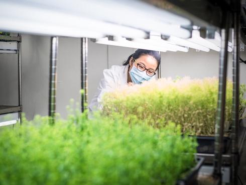 Micropropagazione o coltura in vitro: piante sane, piante certificate e cloni della pianta madre