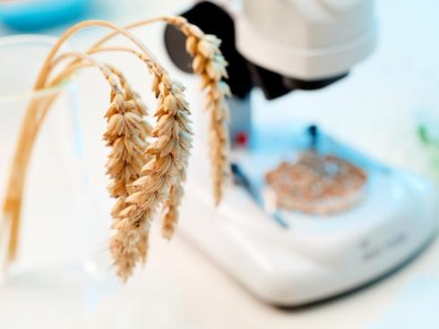 Si scrive Crispr e si legge crisper, una delle più grandi innovazioni biotech dai tempi della Pcr