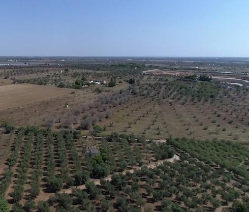 10 ettari in trattamento dal 2016 a Nardò (Lecce)