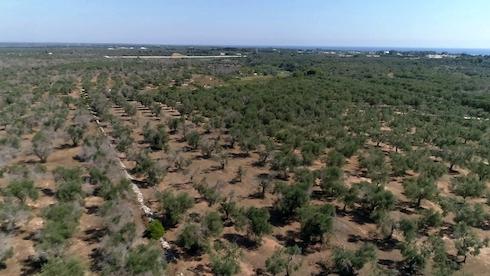 4 ettari in trattamento dal 2018 ad Otranto (Lecce)