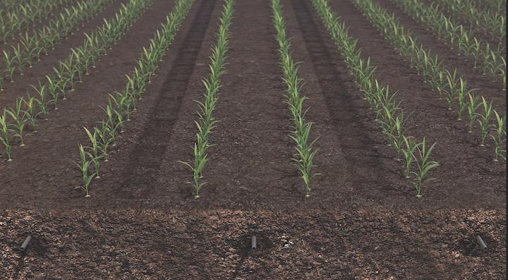 Subirrigazione netafim quando l 39 innovazione esalta la for Netafim irrigazione