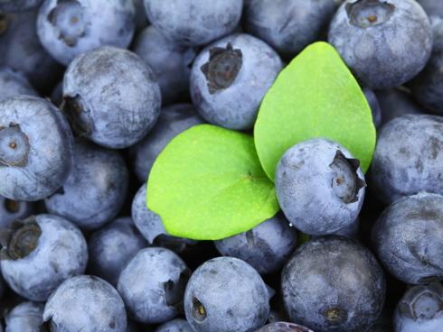Mirtillo, un piccolo frutto molto salutistico