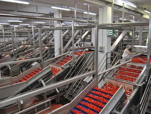 Linea di lavorazione del pomodoro all'interno del Consorzio Casalsco del pomodoro