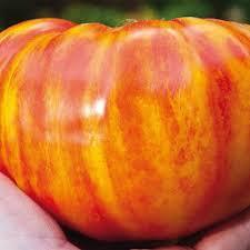Pomodoro Big rainbow